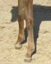 Healthy foal